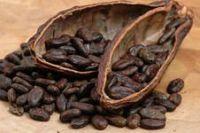 КАКАО БОБЫ - натуральные какао плоды